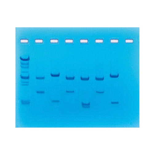 Edvotek 225 DNA Fingerprinting Using Restriction Enzymes