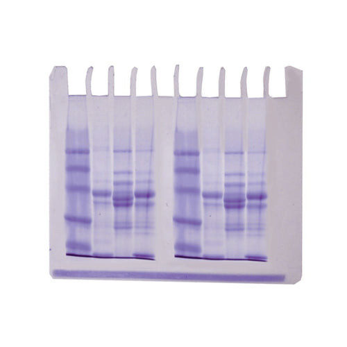Edvotek 253-B LyphoProtein Samples ONLY