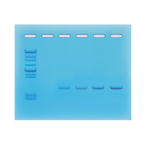 Edvotek 330 Amplification of DNA by PCR