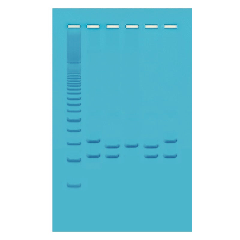 Edvotek 334 PCR-Based VNTR Human DNA Typing