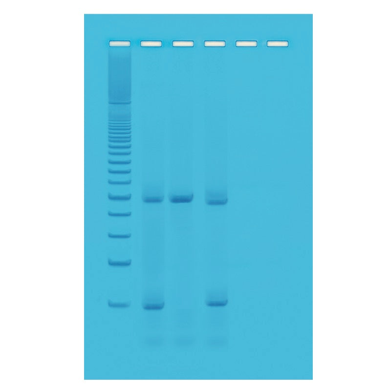 Edvotek 337 Drosophila Genotyping Using PCR