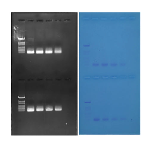 380 Discovering Quantitative PCR Amplification and Analysis