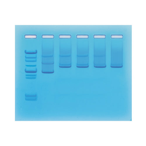 Edvotek 957 DNA Damage & Repair