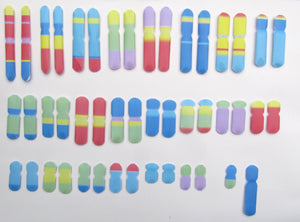 Colourful Chromosomes