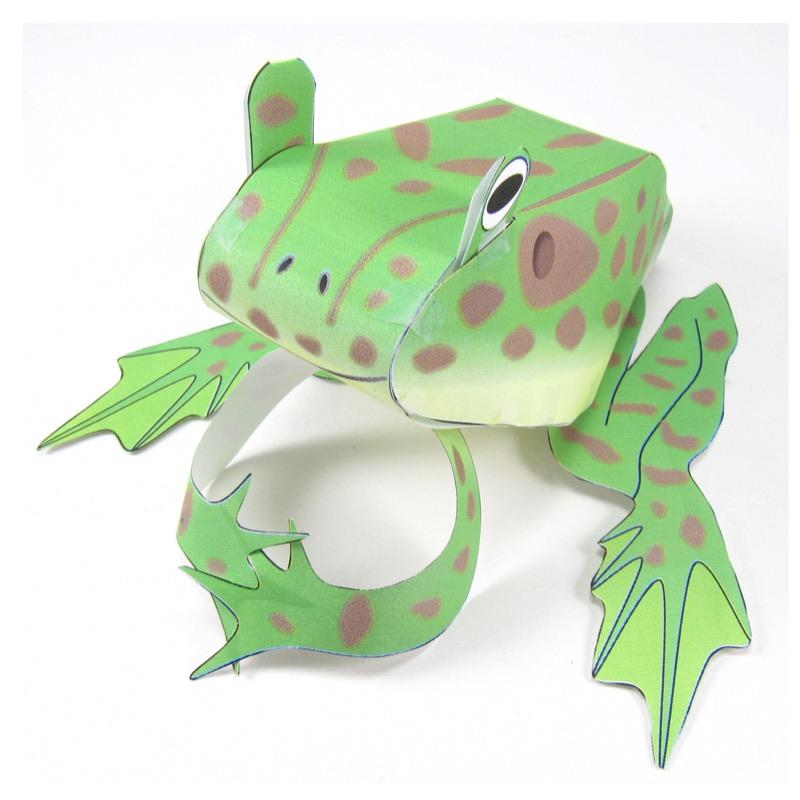 Frog life cycle origami organelle