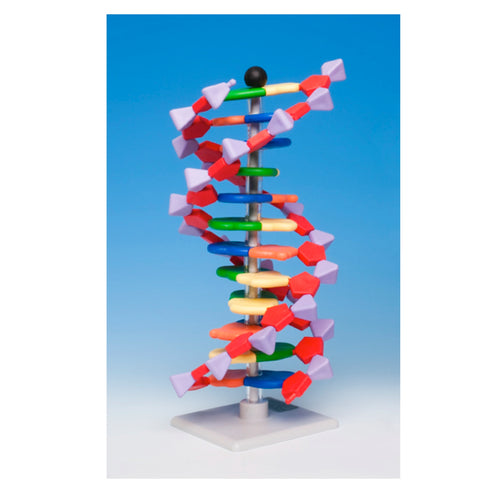 DNA Model - 12 Layer Kit