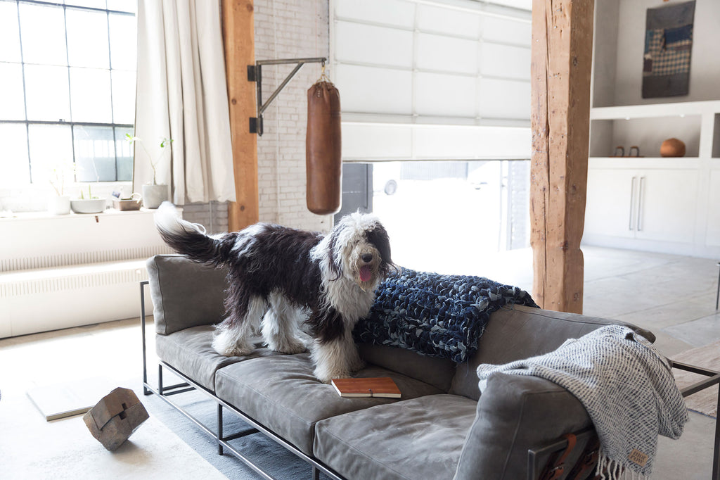 denim weighted blanket draped over couch with dog on couch