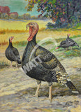 Broad Breasted Bronze Turkeys Heritage Poultry Painting Canvas Print