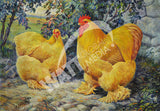 Buff Cochins Heritage Poultry Painting Canvas Print