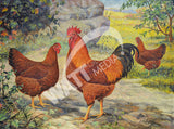 New Hampshires Heritage Poultry Painting Canvas Print