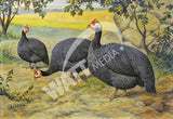 Pearl Guineas Heritage Poultry Painting Canvas Print