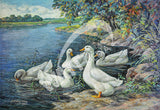 Pekin Ducks Heritage Poultry Painting Canvas Print