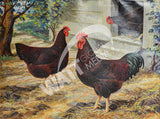 Rhode Island Reds Heritage Poultry Painting Canvas Print
