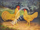 Single Comb Buff Leghorns Heritage Poultry Painting Canvas Print