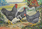 Utility Barred Rocks Heritage Poultry Painting Canvas Print