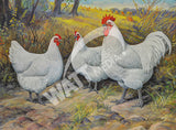White Australorp Heritage Poultry Painting Canvas Print
