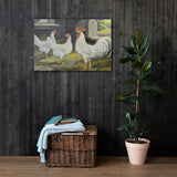 White Leghorns Heritage Poultry Painting Canvas Print