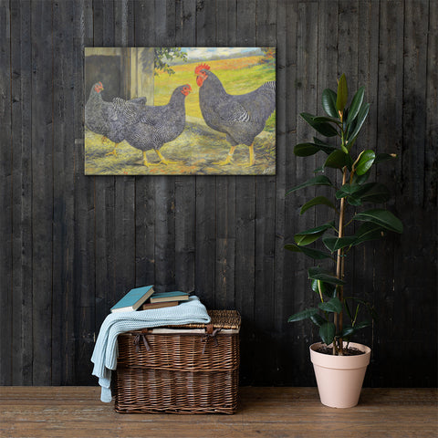 Barred Plymouth Rocks Heritage Poultry Breed Canvas Print