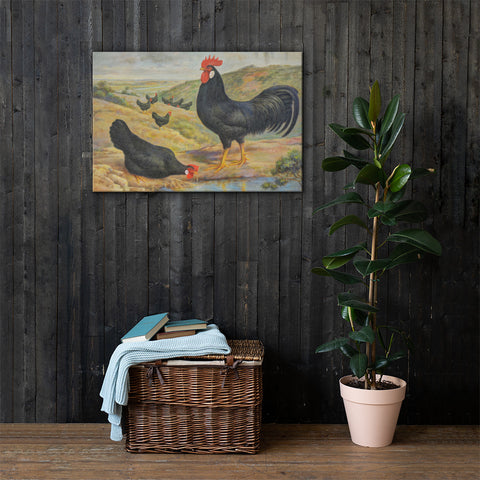 Single Comb Black Leghorns Heritage Poultry Breed Canvas Print