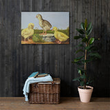Chick Poult Duckling Heritage Poultry Painting Canvas Print