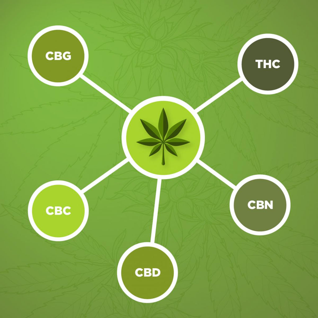CBG vs. CBD vs. CBN vs. CBC - The Ultimate Comparison Guide