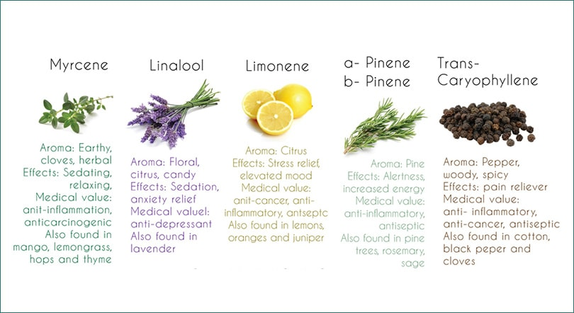 Getting to Know Terpenes