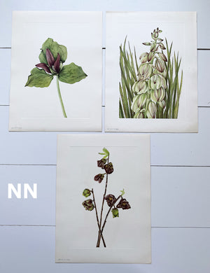 1925 Vintage Botanical Print Sets from the Smithsonian Publication of North American Wild Flowers (BURGUNDIES AND WINES, SETS OF THREE)