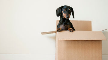 4 Essential Qualities of Shipping Boxes for Small Business