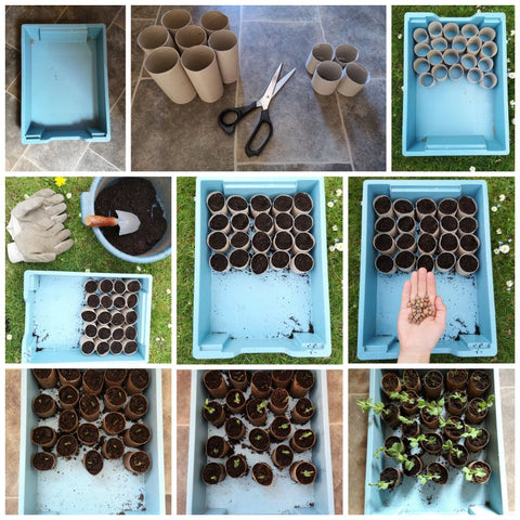 Collage of images to grow seedlings