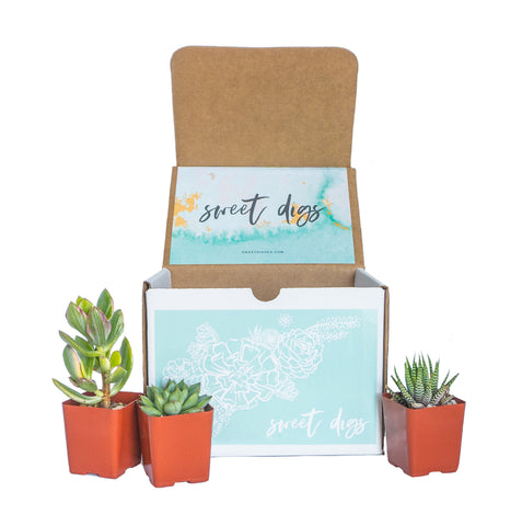 Sweet Digs Subscription Box December