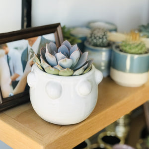 Get a Smile! Give a Smile! Succulent Edition