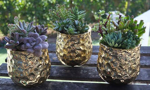 DIY-Gold Mini Succulent Arrangement
