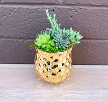 Load image into Gallery viewer, DIY-Gold Mini Succulent Arrangement