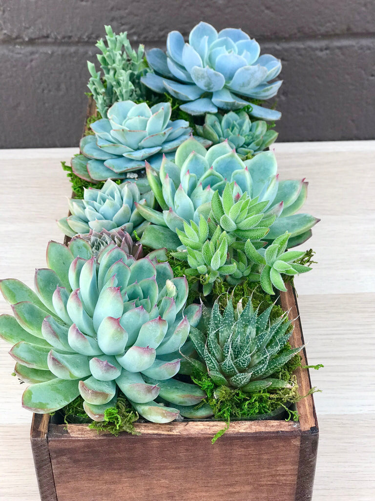 DIY Large Reclaimed Wood Box Succulent Arrangement