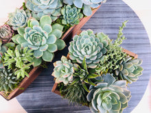 Load image into Gallery viewer, DIY- Large Reclaimed Wood Box Succulent Arrangement