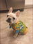 Dog Floral Hawaiian Shirt