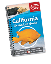 California Ocean Life Guide