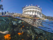 Catalina Island Dive Trip [July 14 2019]