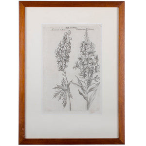1719 De Bry Botanical Engravings - a Pair