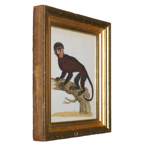 18th Century Monkey Watercolors - A Pair