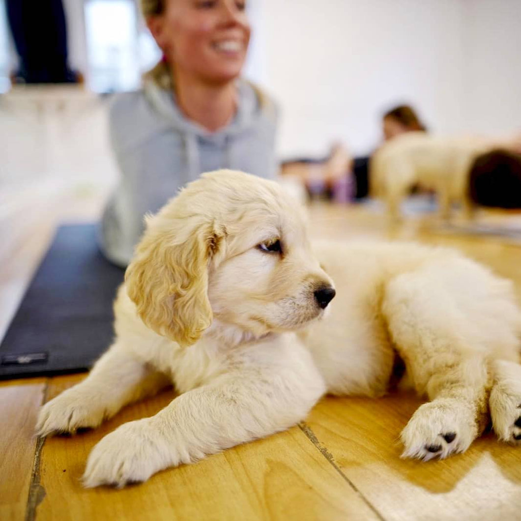 PUPPY YOGA - LONDON - FEBRUARY 19TH - EAST LONDON
