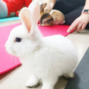 BUNNY YOGA LONDON TICKETS SEPTEMBER 7TH