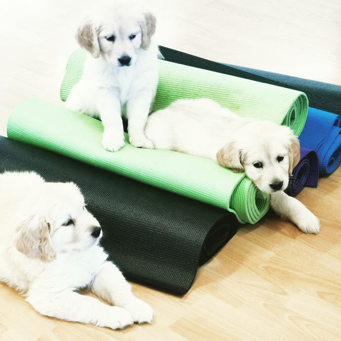 PUPPY YOGA LONDON TICKETS DECEMBER 7TH
