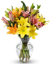 Load image into Gallery viewer, Benchmark Bouquets 12 Stem Assorted Asiatic Lilies, With Vase (Fresh Cut Flowers)