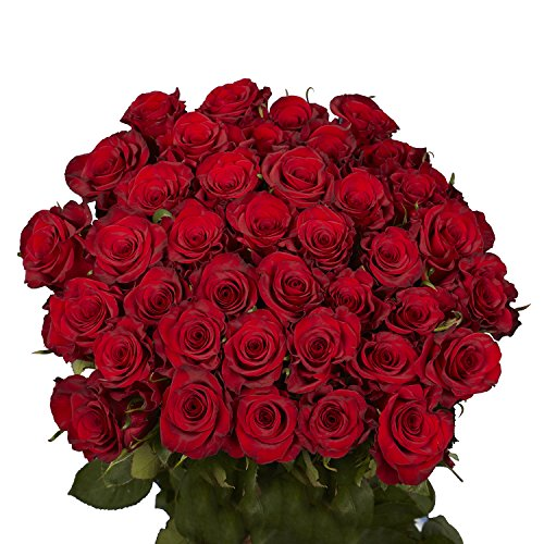 GlobalRose 50 Red Roses - Fresh Flowers Delivery- Lovely Bright Blooms
