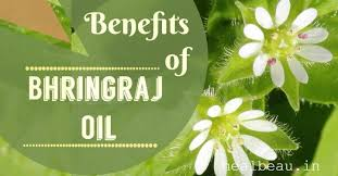 Why Bhringraj is Good For your Hair?