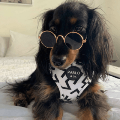 Small Pet Sunglasses
