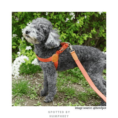 Adventure Harness - Mars (Red)