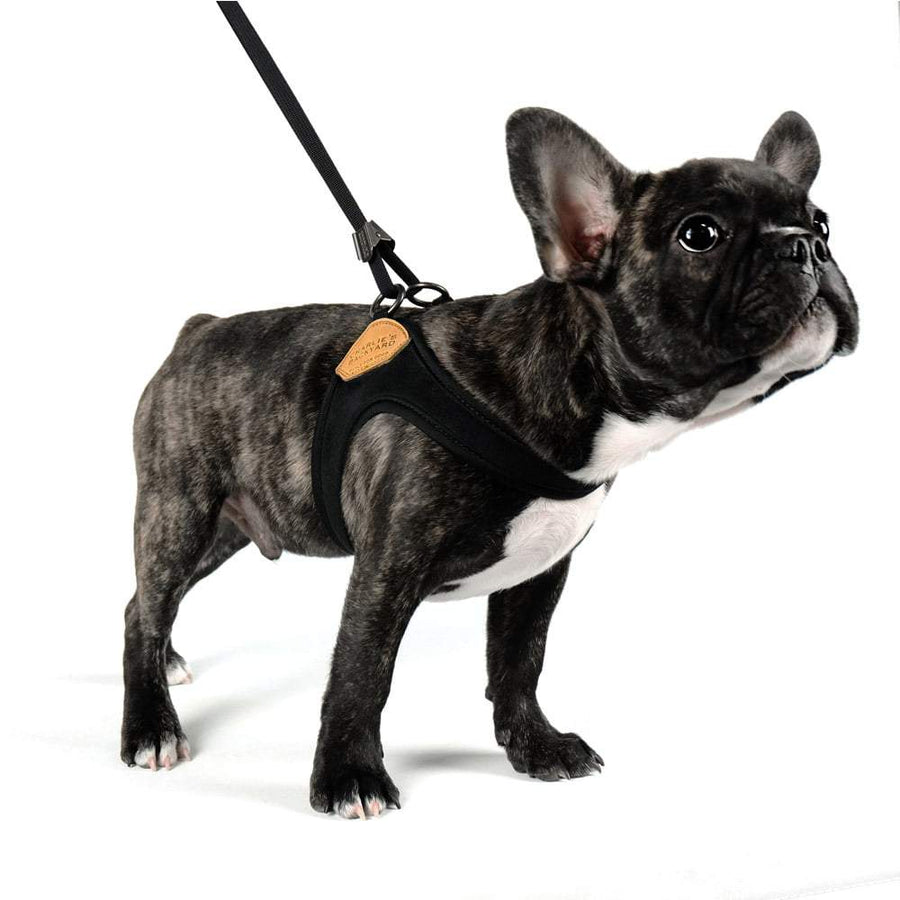 Adjustable Easy Harness - Black Harness Charlie's Backyard