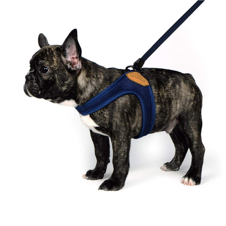 Adjustable Easy Harness - Navy Harness Charlie's Backyard